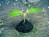 Proyectos de Biotecnología con Empresas